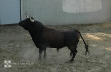 """""""Conde de la Maza"""" desembarcados en los Corrales del Gas"""