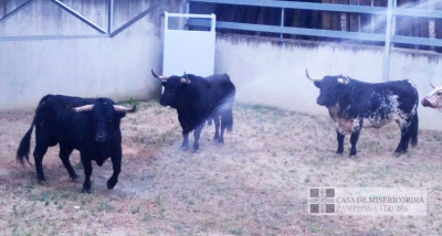 Toros de la ganadería de Puerto de San Lorenzo desembarcados en los Corrales del Gas