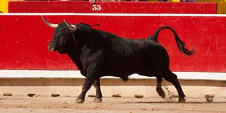 Premios Carriquiri, toro saliendo a la plaza
