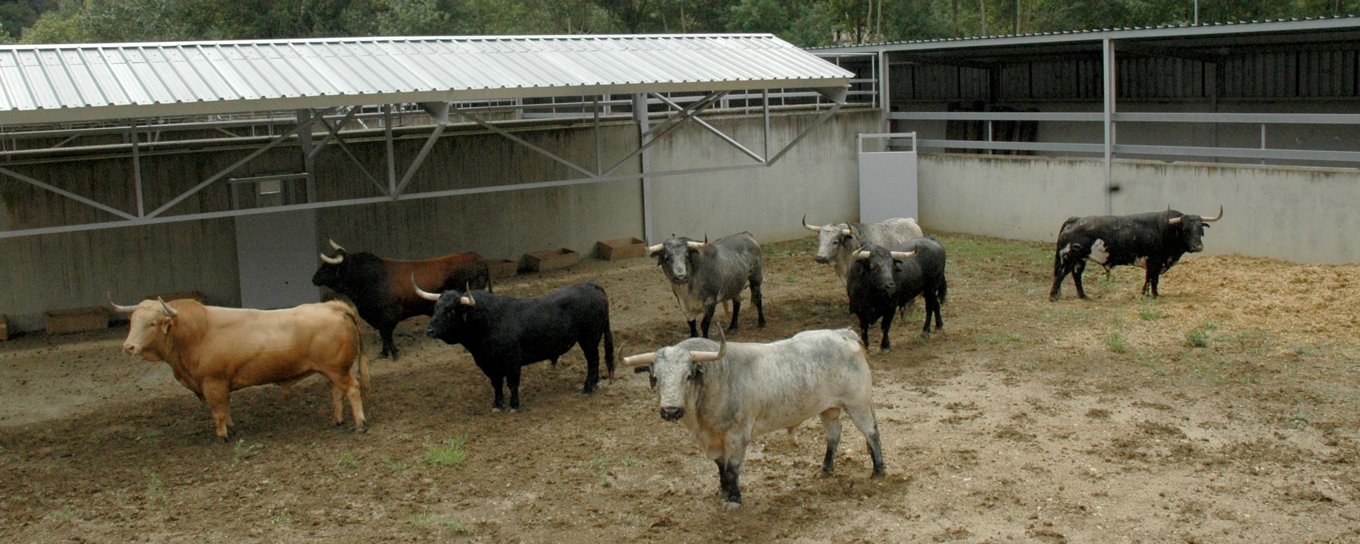 Toros de Cebada Gago en los corrales del Gas. De izquierda a derecha: uno melocotón, un castaño, otro negro, un cárdeno claro casi ensabanado, otro cárdeno entrepelado, un cárdeno oscuro, otro cárdeno claro y uno negro bragado.