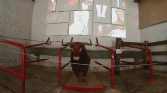 Toro de José escolar entrando en la plaza de Toros de Pamplona
